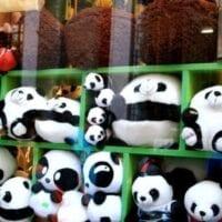 China's Favorite Animal