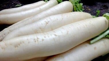 chinese turnip