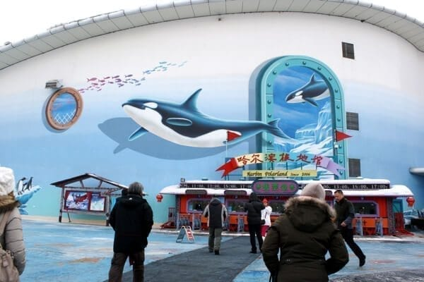 Harbin Polarland's got nothing on Seaworld. Those orcas painted on the front of the building are what we would call false advertising.