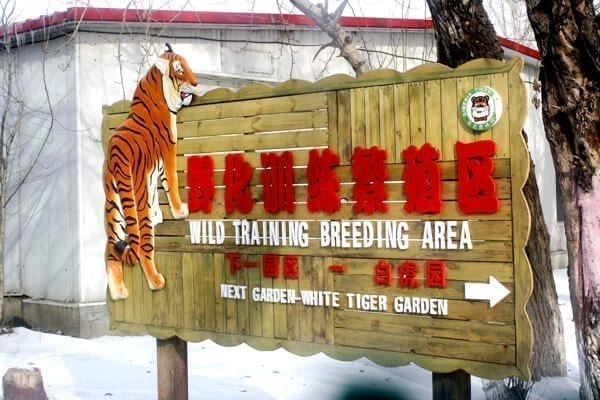 tiger-reservation-harbin - Harbin Ice Festival and Freezing our Butts Off! by thewoksoflife.com