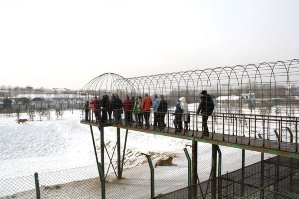 tiger-reservation-skywalk - Harbin Ice Festival and Freezing our Butts Off! by thewoksoflife.com