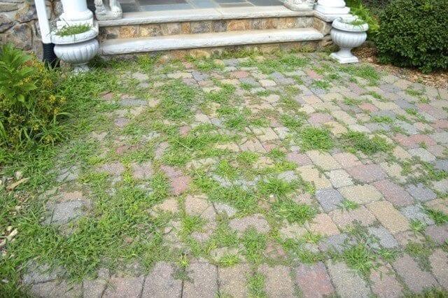 walkway weeds