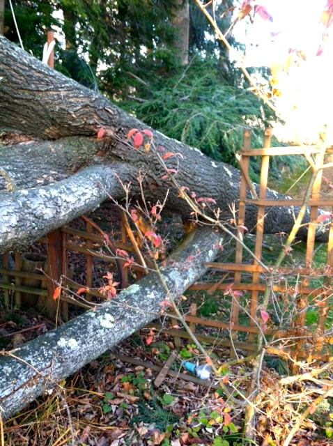 tree down hurricane