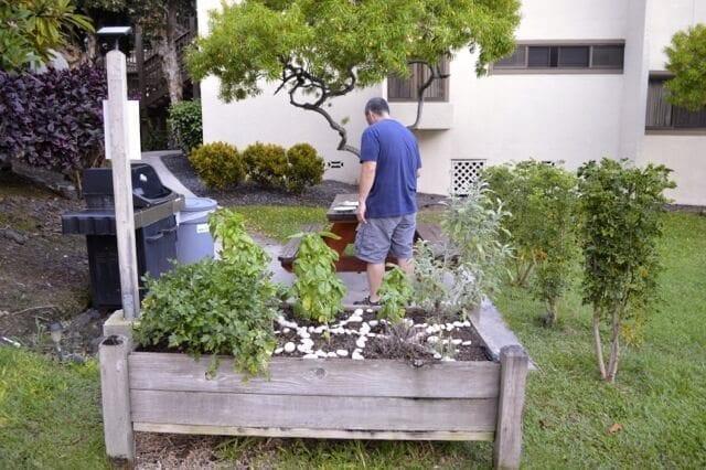 Herb garden, by thewoksoflife.com