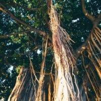 16 Reasons Why Hawaii is Pretttttty Much The Bomb