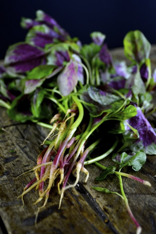 amaranth-stir-fry-3