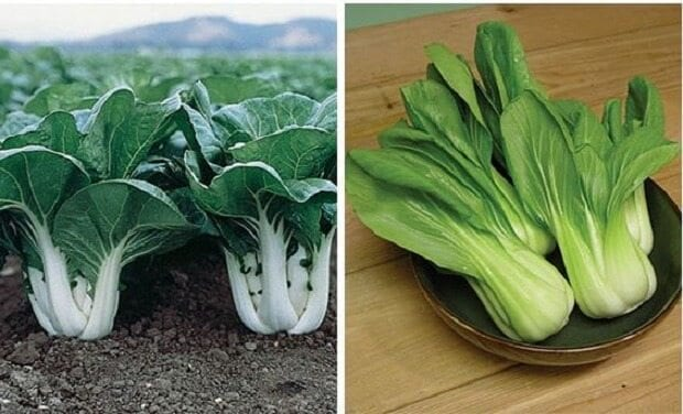 Vegetable that looks like small cabbage