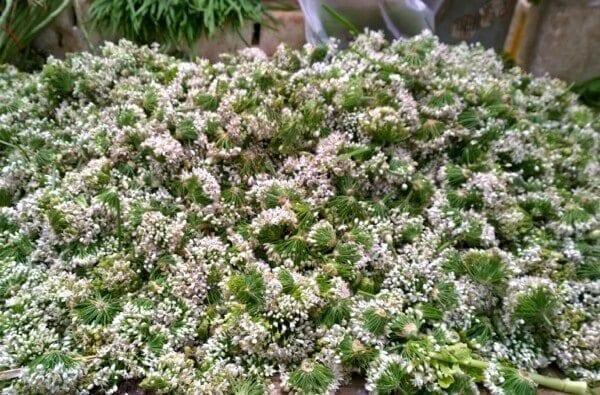 Chive Flowers, thewoksoflife.com