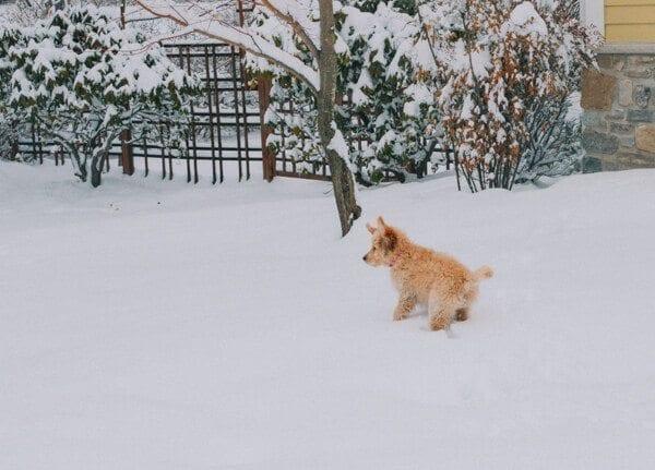 barley-snow--11