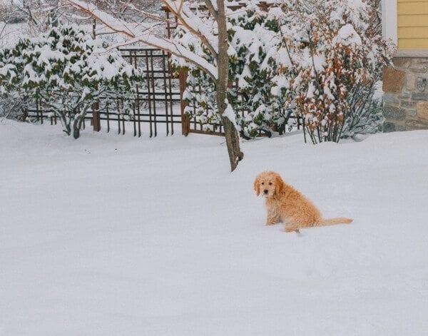 barley-snow--12