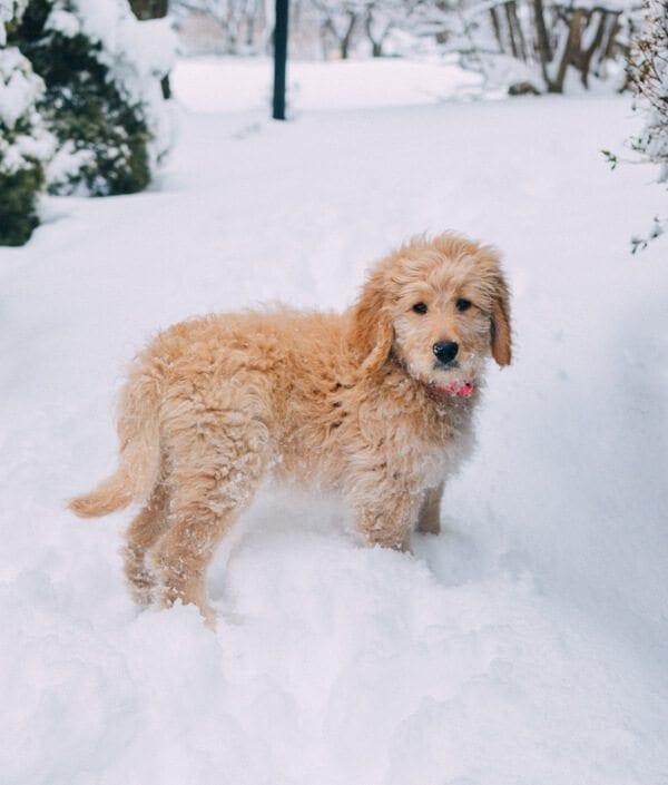 barley-snow--3
