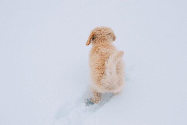 barley-snow--9