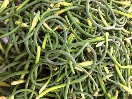 Garlic-scapes-stems
