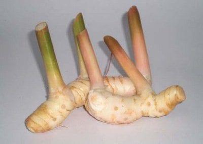 fresh-galangal-root