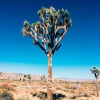 Joshua Tree & Desert Adventures