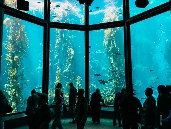 Monterey Bay Aquarium, by thewoksoflife.com
