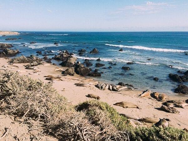 California Coast Elephant Seals, by thewoksoflife.com