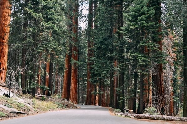 Sequoia National Park road