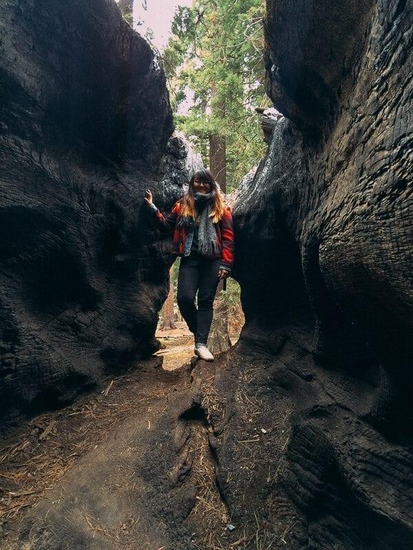 sequoia-national-park-17