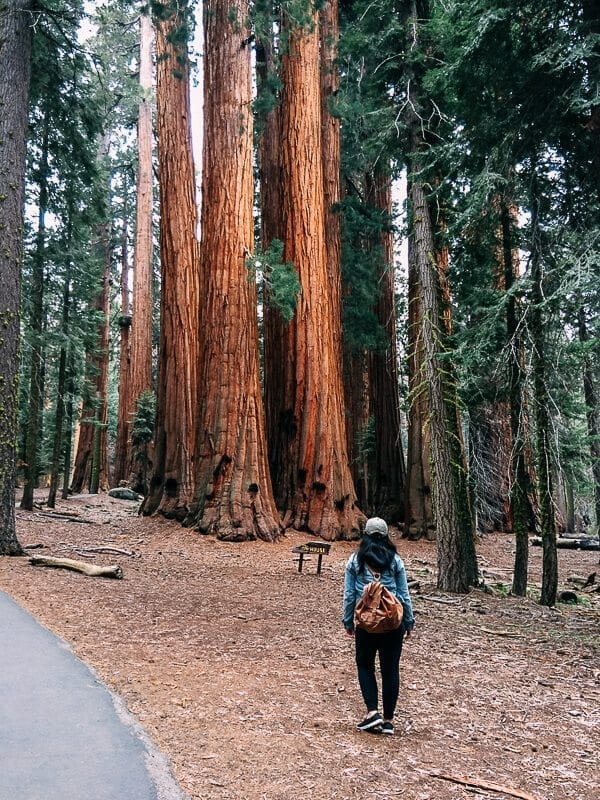 Sequoia Congress Trail