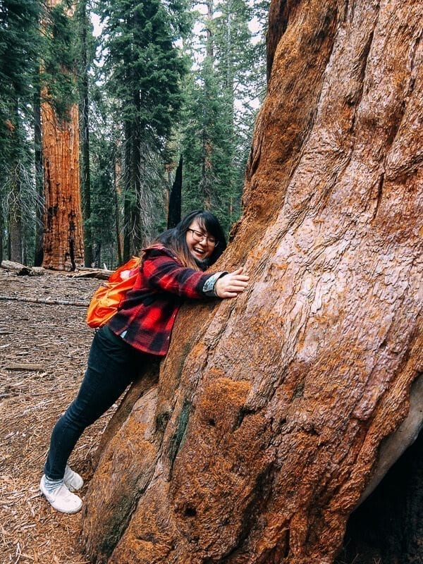 sequoia-national-park-20