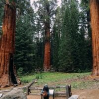 Somewhere In the Woods: Sequoia National Park