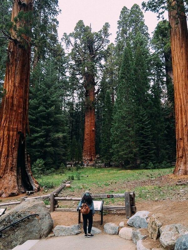Sequoia National Park General Sherman