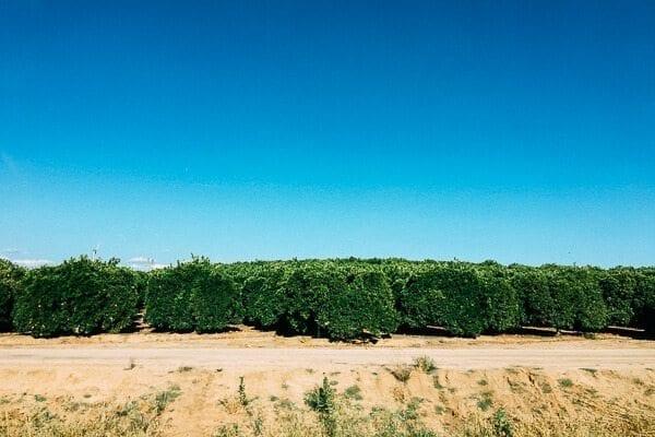 California Citrus Grove