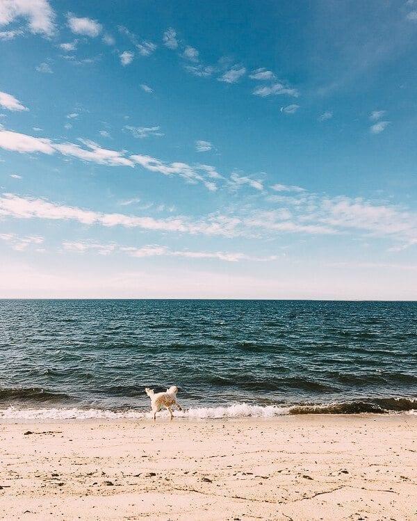 Winter...in Cape Cod?