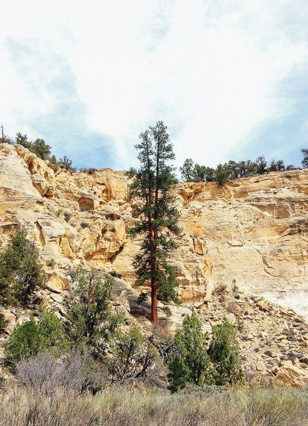 Willis Creek Utah