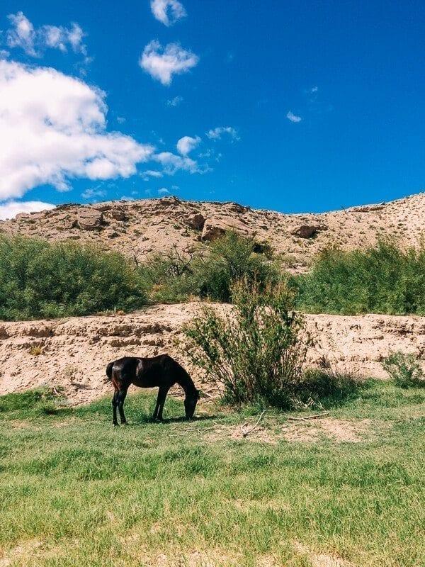 Spirit Horse Boquillas Canyon, Big Bend National Park - thewoksoflife.com