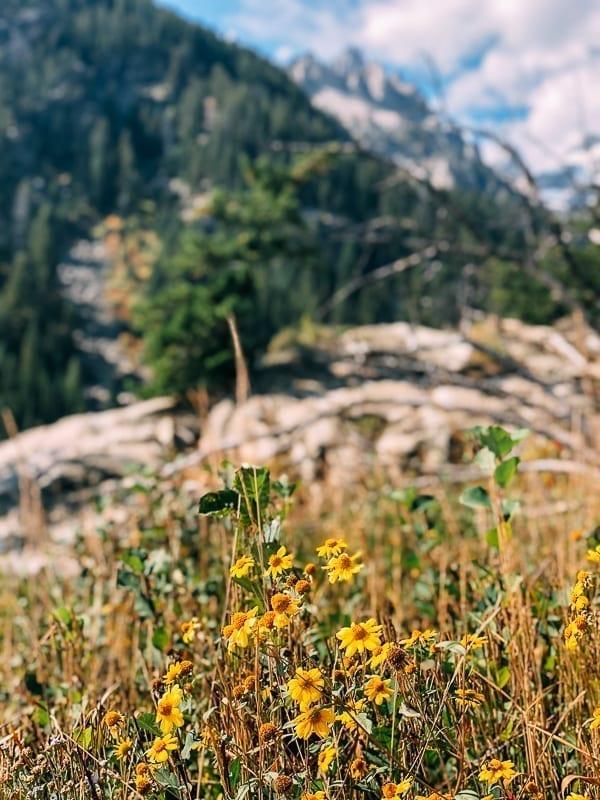 Yellowstone Wildflowers, thewoksoflife.com