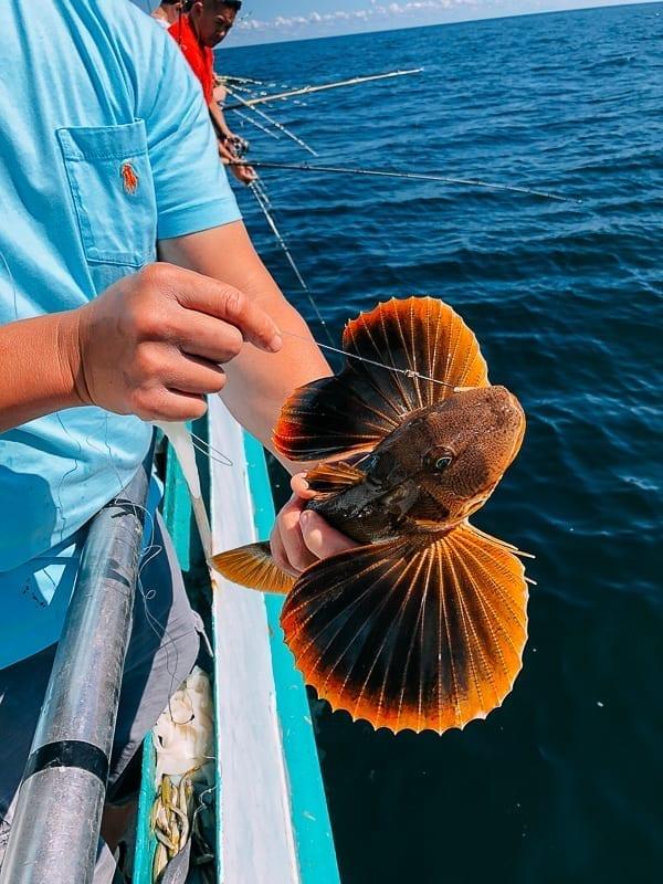 Catching a sea robin, thewoksoflife.com