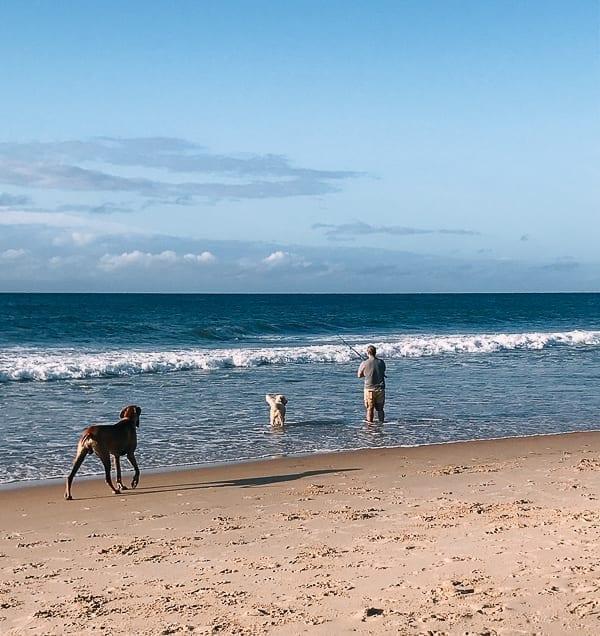 Surf fishing with dogs, thewoksoflife.com