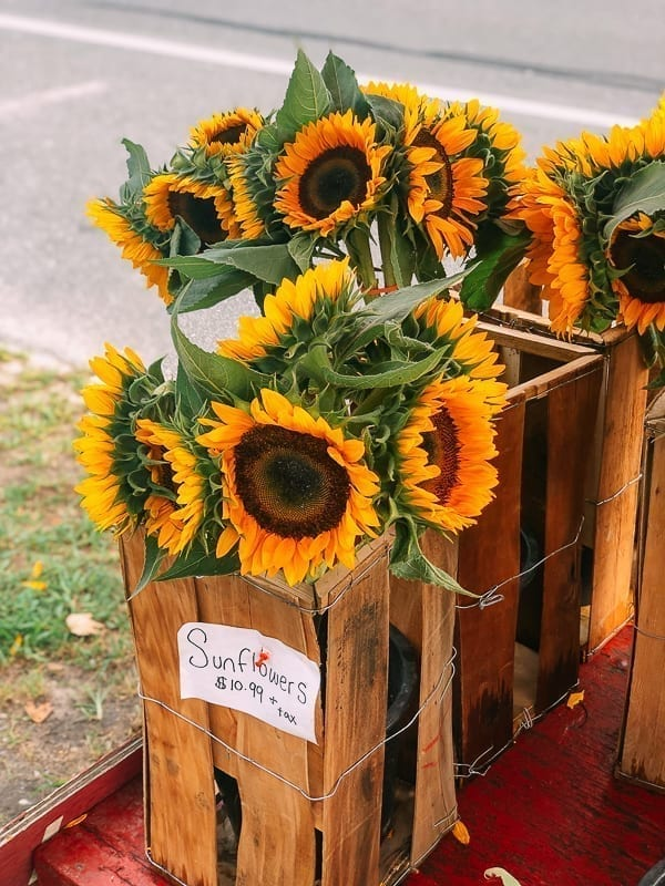 Sunflowers, thewoksoflife.com