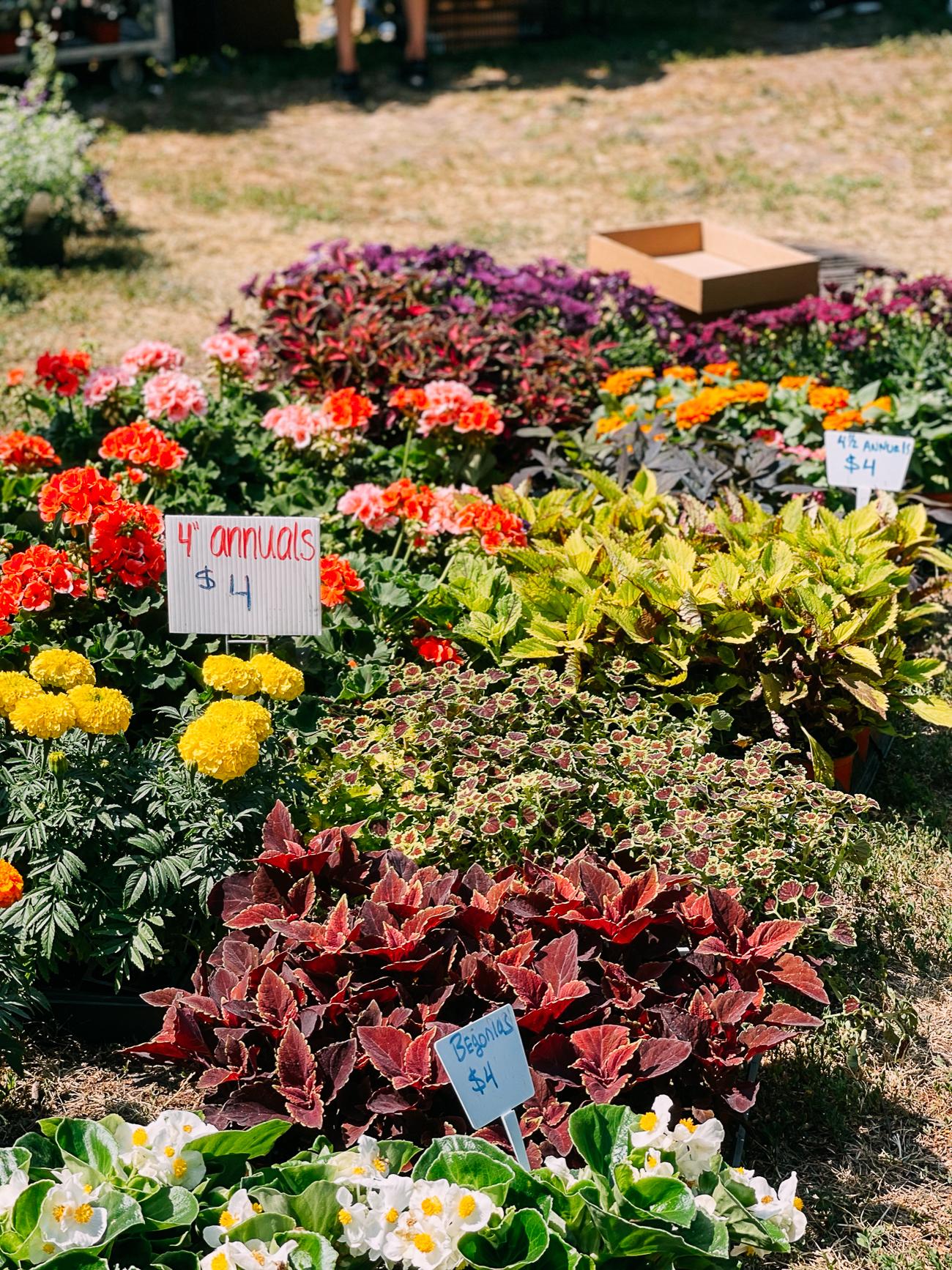 Flowers at Lincoln Park Farmer's Market